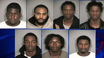 7 black feral hood rat killers