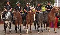 Dallas Mounted Police